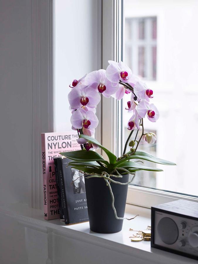 InteriØrtips orkideer i stuen